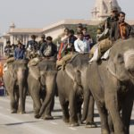 Elephants walking down the Raj Path in New Delhi, India